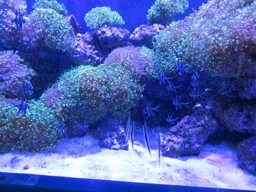 2018 03 05 aquarium of the week adventure aquarium nj reef club