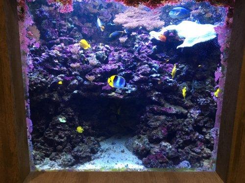 2018 03 06 2nd aquarium of the week atlantic city aquarium nj