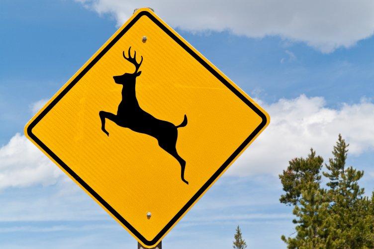 DeerCrossingSign.jpg