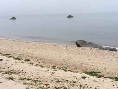 Foggy beach.jpeg