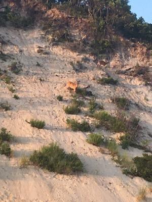 Deer on hill.jpeg