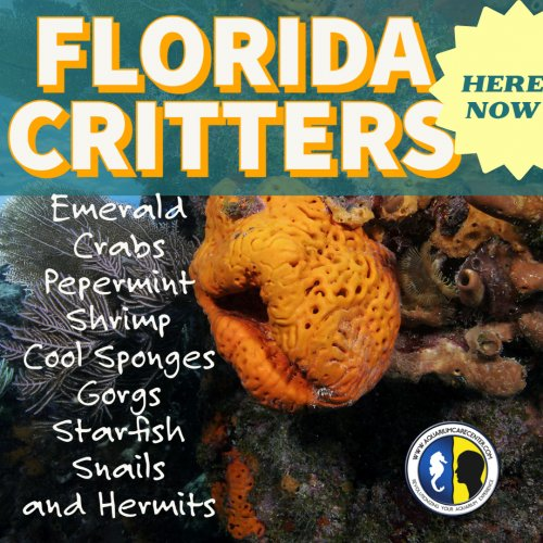 FLorida Critters  Aug 2021.jpg