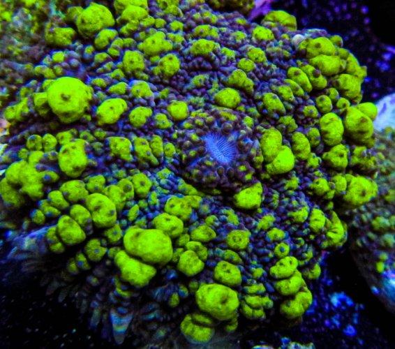 Toxic Bounce Mushroom 1.JPG