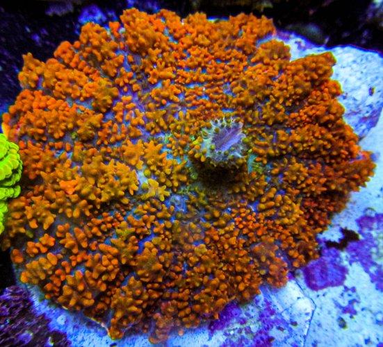 UC Tropic Thunder Bounce Mushroom.JPG