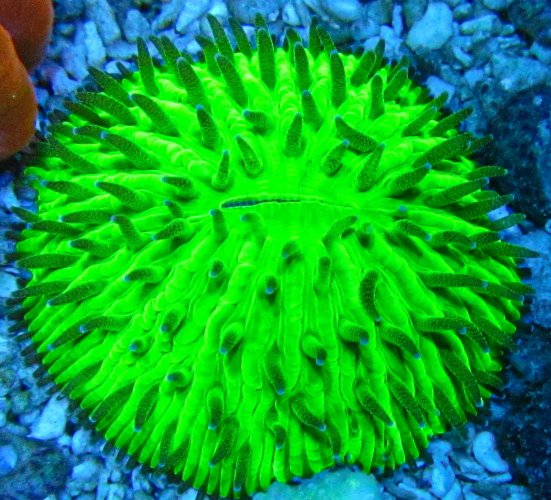 Aquacultured Neon Plate.jpg