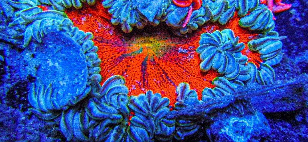 Ultra Rock Flower anemones _2736.JPG