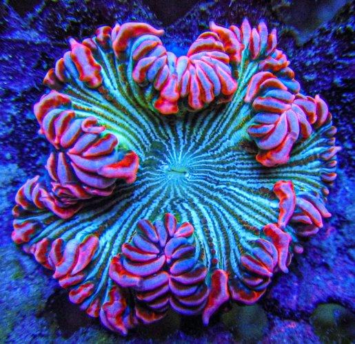 Ultra Rock Flower anemones _2737.JPG