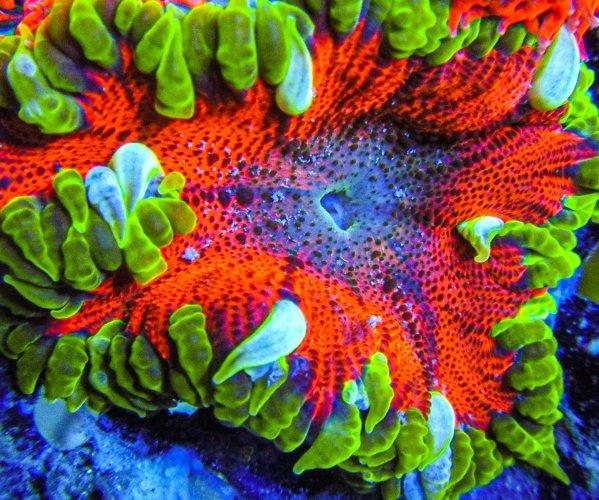 Ultra Rock Flower anemones _2738.JPG