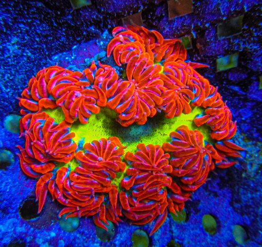 Ultra Rock Flower anemones 2732.JPG