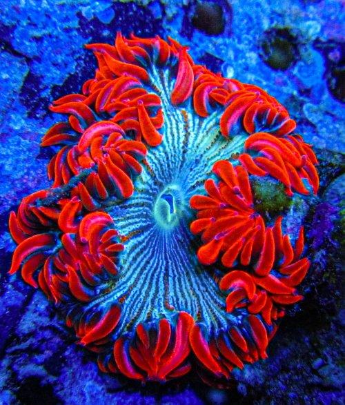 Ultra Rock Flower anemones 2734.JPG